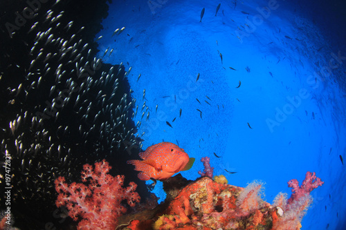 Plakat Podwodna rafa koralowa