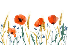 Watercolor Poppies And Wheat I...