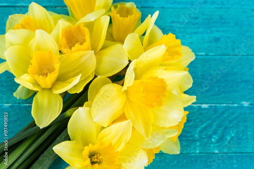 Photo narcissus on a blue background