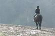 Frau auf Pferd auf Feld