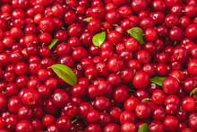 Fresh Organic Cranberries With...