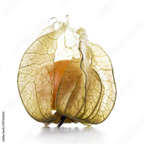 Photo Physalis, fruit with papery husk