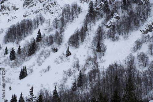 gora-snieg-i-drzewa-wzor