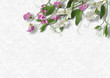 Beautiful spring flowers on a white vintage background
