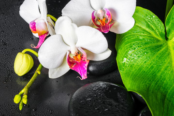 Obraz na Szkle Do Spa beautiful spa concept of white orchid flower, green leaf Calla lily with drops and black zen stones, close up