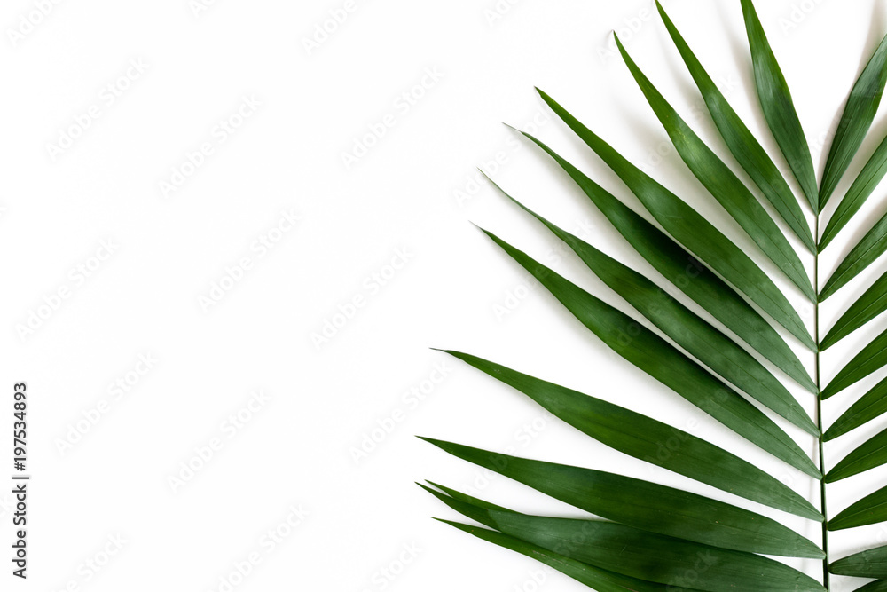 Fototapety, obrazy: Border frame made of green leaves on a pale white background