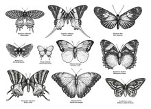 Tropical Butterfly Collection,...