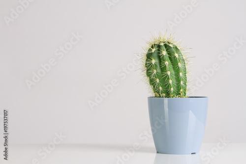 Staande foto Cactus Cactus Vanilla Pastels Trendy Color