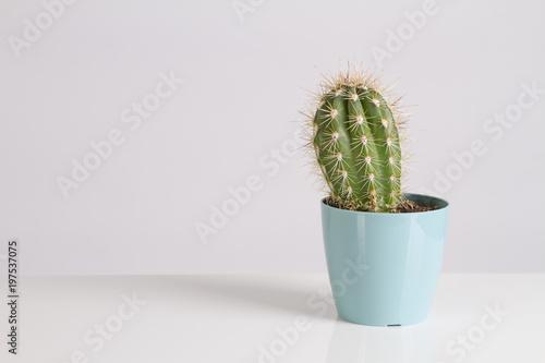 Foto op Canvas Cactus Cactus Vanilla Pastels Trendy Color
