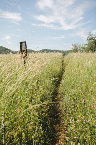Fototapeta The Appalachian Trail - A White Blaze