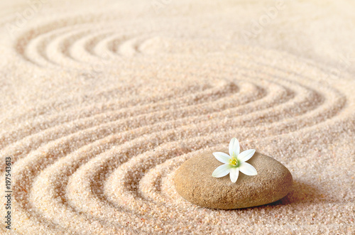 stones and white flower on the sand with circles