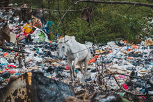White Horse On  Garbage Dump In Polluted Landscape  - Environmental Pollution