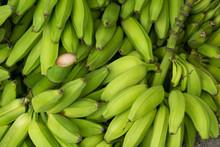 Pile Of Green Banana , Cooking Bananas Or Plantain