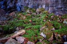 Moss And Rocks Inside A Lava T...