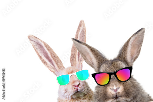 kroliki-w-okularach-przeciwslonecznych-styl-hipsterski