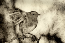 Robin Redbreast ( Erithacus Rubecula) Monochrome Textured Effect On A Branch Of A Winter Woodland Tree
