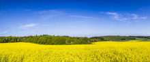 Spring Countryside Of Yellow R...