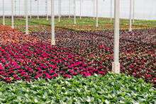 Colorful Flowering Plants In A...