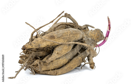 root of a dahlia on a white background