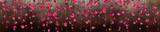 Fototapeta Kwiaty - Panoramik Çiçek Manzarası