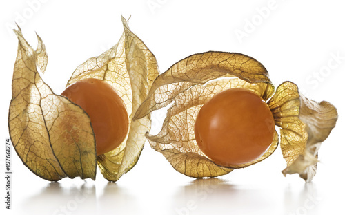 Physalis, fruits with papery husk Canvas Print