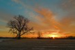 Sunrise over trees.