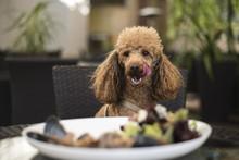 Dog Dinner In Restaurant
