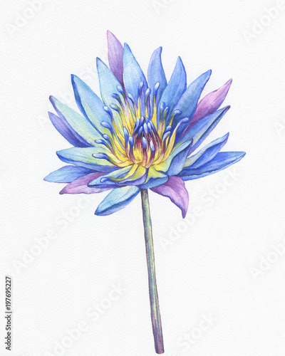 Banner poster of blue lotus flower with leaves seed head bud banner poster of blue lotus flower with leaves seed head bud water mightylinksfo