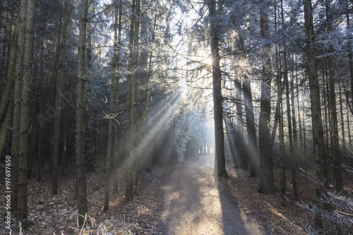 Germany, Bavaria, Upper Bavaria, Markt Schwaben, Schwabener Moos, hiking path in forest