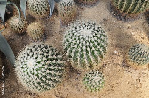 Tuinposter Cactus The cactus