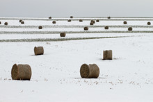 Rolled Hay Bales In Winter Field