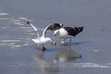 One Seagull Got A Shell, But A...