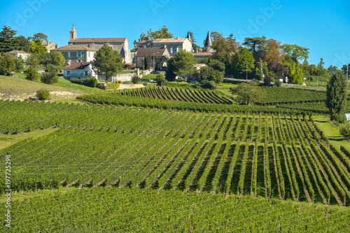 Wall Murals Pistachio Saint-Emilion-Vineyard landscape-Vineyard south west of France