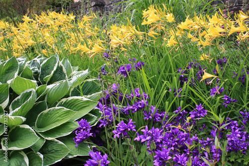Im Garten Hostas Lilien Glockenblumen Buy This Stock Photo And