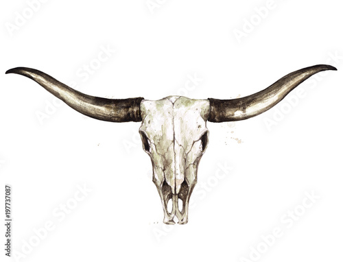 Longhorn Skull. Watercolor Illustration.