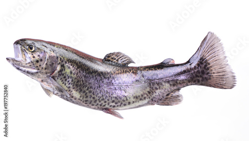 Fish trout Fototapet