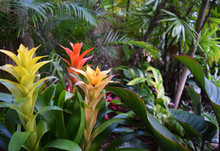 Tropical Flowers, Colorful Bro...