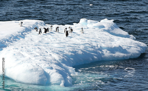 Foto op Canvas Antarctica Gentoo Penguins standing on a iceberg. Melting blue ice floating in Antarctic Ocean. Antarctica Landscape