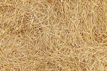 Straw, Dry Straw, Hay Straw Yellow Background Texture