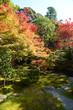 日本 紅葉の京都の秋 落ち葉