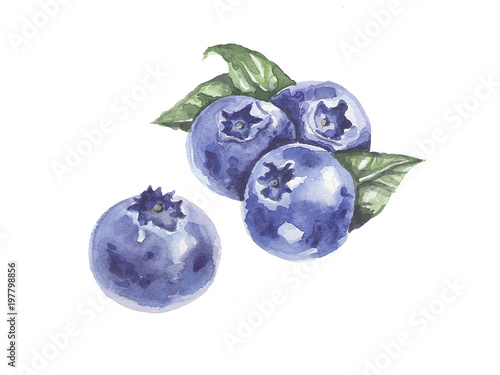 Obraz A bunch of berries. Blueberies. Watercolor - fototapety do salonu