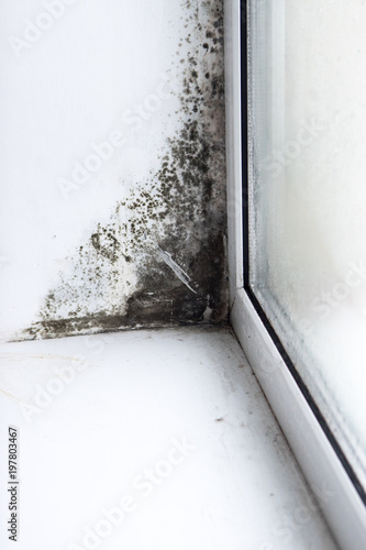 Inscription molds on the wall next to the window Fototapet