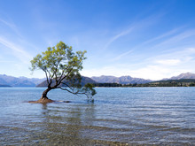 The Lonely Tree Of Lake Wanaka...