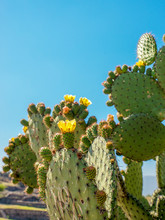 Cactus In Front Of Blue Sky