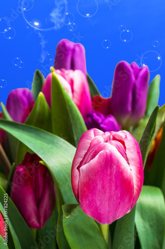 Fotografie, Obraz Bouquet of multicolored tulips