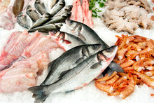 Different Kinds Of Fish On Mar...