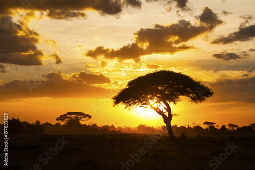 Foto op Plexiglas Afrika Sunset in savannah. Amboseli National Park, Kenya.
