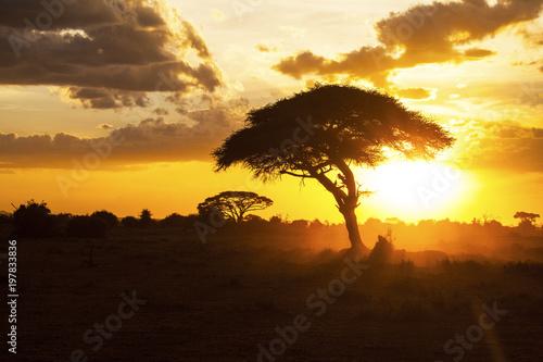 Foto auf Leinwand Honig Sunset in savannah. Amboseli National Park, Kenya.