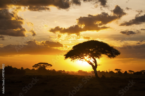 Foto op Plexiglas Afrika Sunset in savannah. Amboseli National Park, Kenya