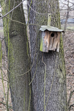 Old Bird Booth Hung On Tree Trunk.